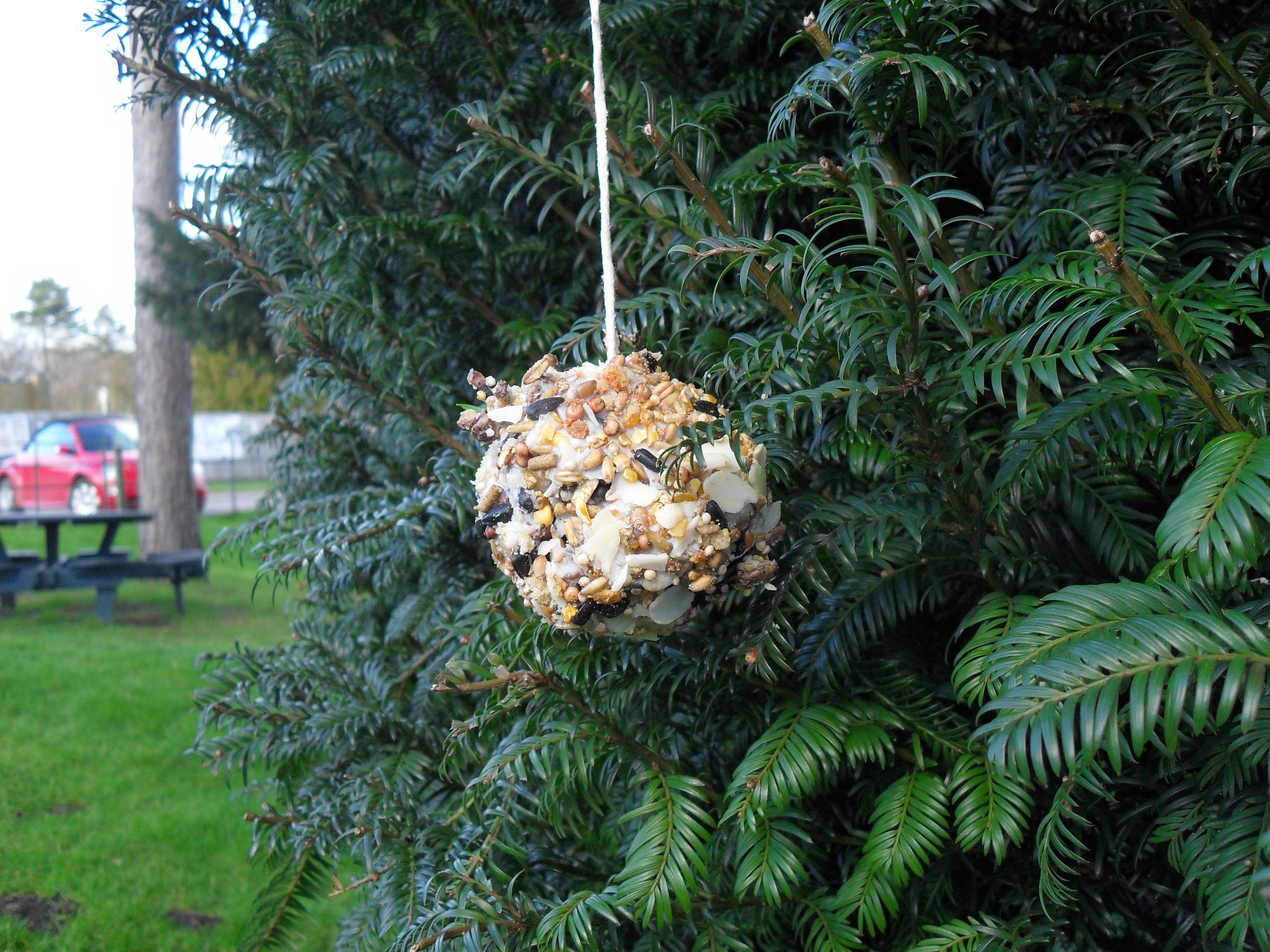 Children's Activity- make a pine cone bird feeder